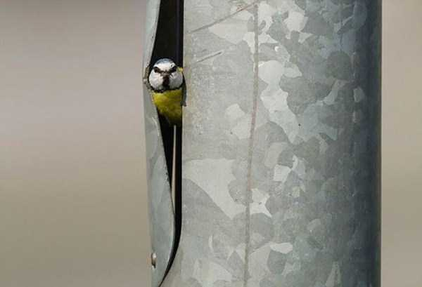 bird-nests-in-unusual-places (7)