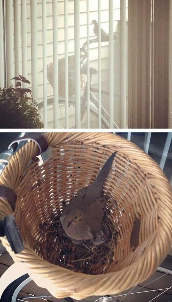 bird-nests-in-unusual-places (9)
