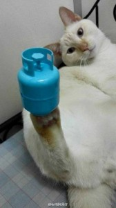 This Cat Has Some Impressive Balancing Skills (9 photos) 2