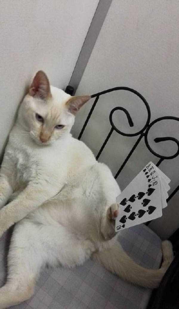 cat-with-balancing-skills (5)