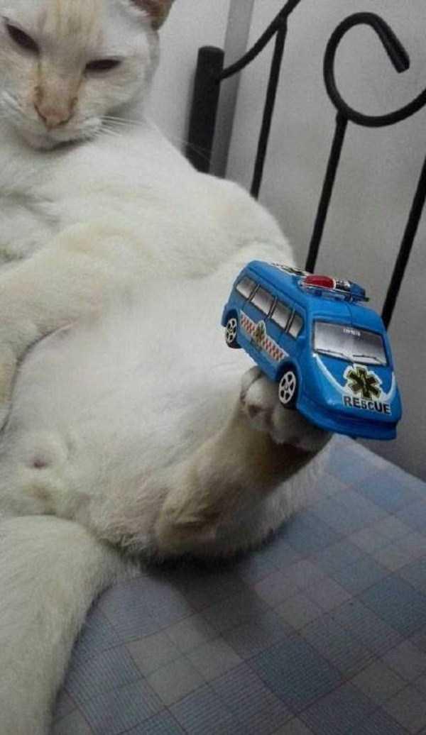 cat-with-balancing-skills (8)