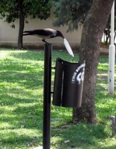 Environmentally Conscious Crow (5 photos) 4