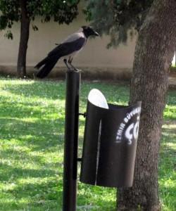 Environmentally Conscious Crow (5 photos) 5