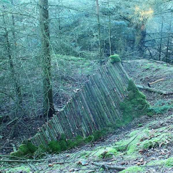 diy-shelter-in-the-woods (4)