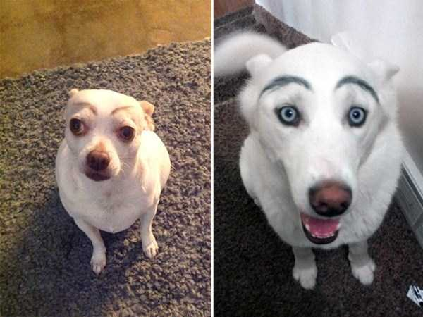 dogs-with-fake-eyebrows (15)
