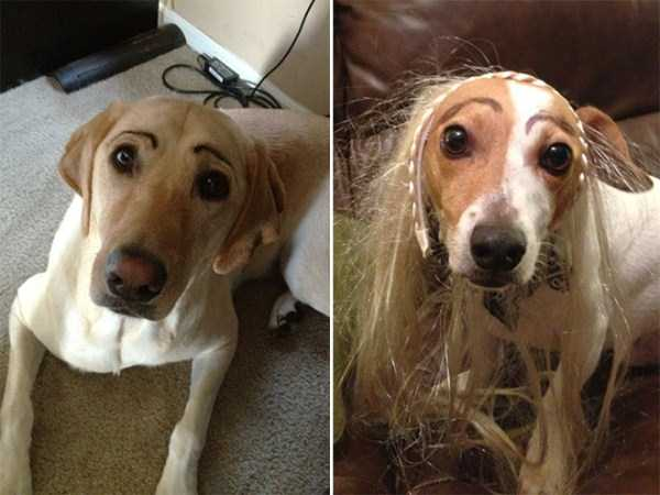 dogs-with-fake-eyebrows (17)