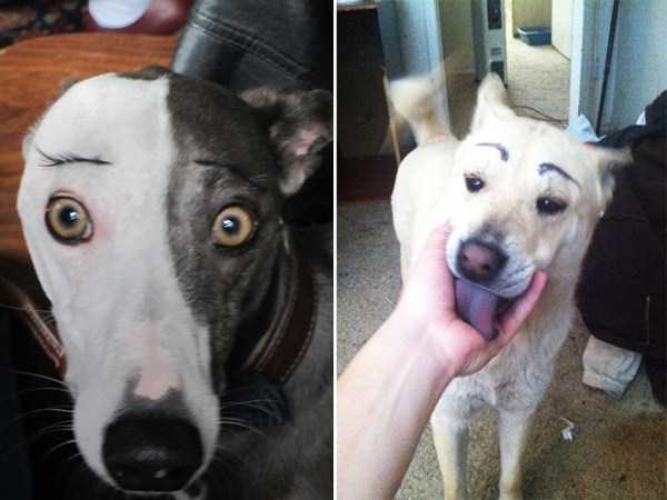 dogs-with-fake-eyebrows (21)