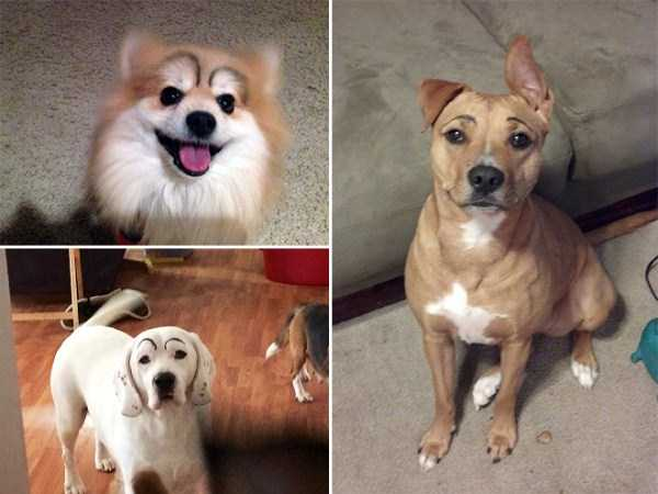 dogs-with-fake-eyebrows (25)