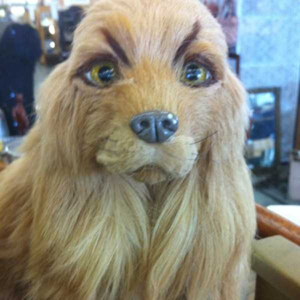 dogs-with-fake-eyebrows (7)