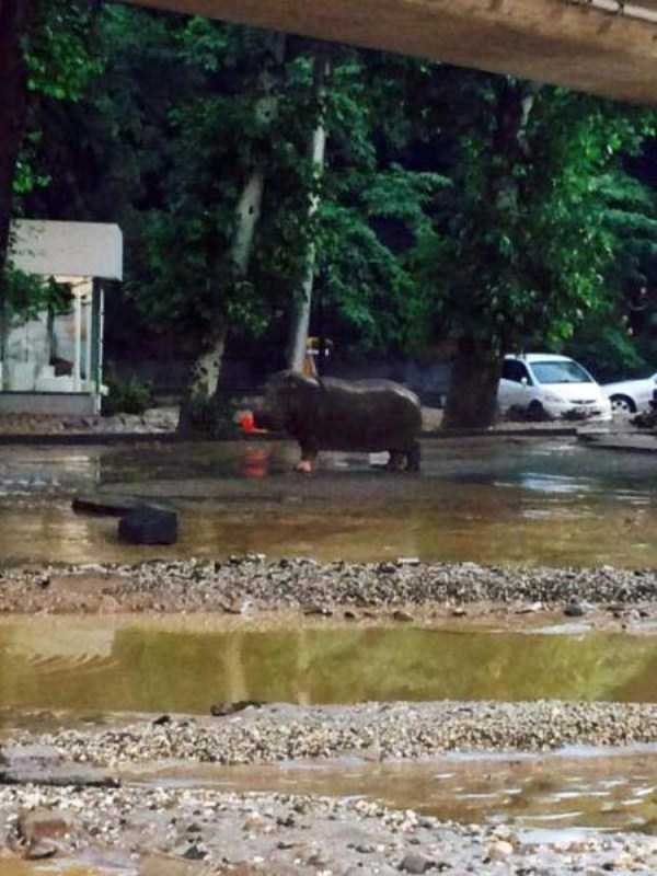 flooded-zoo-in-tbilisi (13)