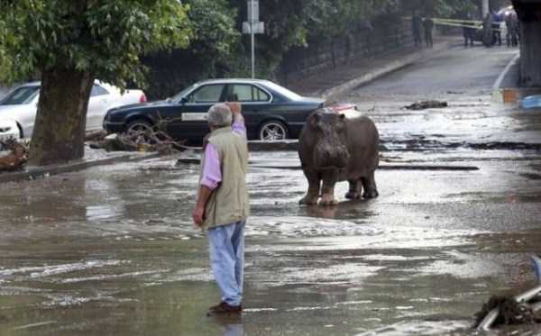 flooded-zoo-in-tbilisi (16)