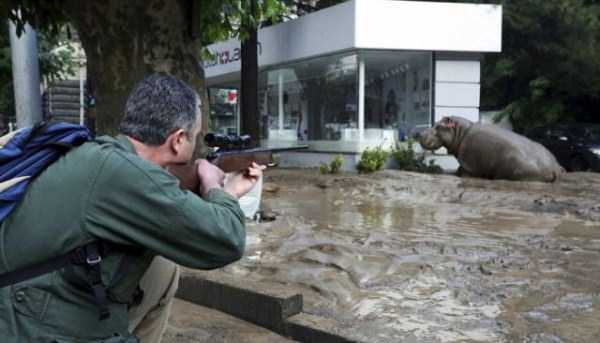 flooded-zoo-in-tbilisi (17)