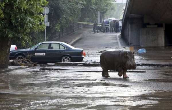 flooded-zoo-in-tbilisi (19)