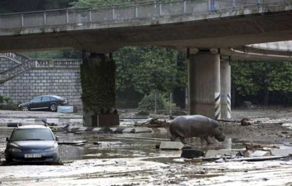 flooded-zoo-in-tbilisi (20)