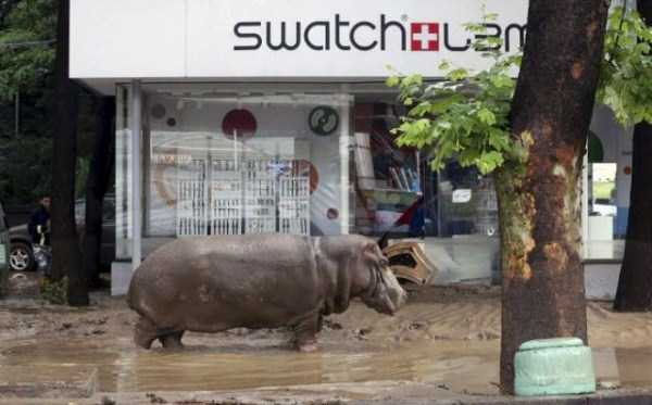 flooded-zoo-in-tbilisi (21)