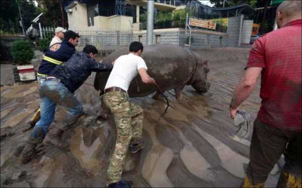 flooded-zoo-in-tbilisi (27)