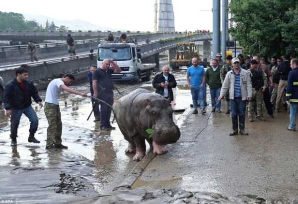 flooded-zoo-in-tbilisi (5)