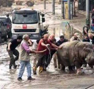 Zoo Animals Roam Free Through Tbilisi (30 photos)
