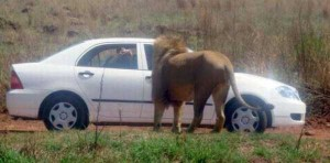 Meanwhile in Africa (34 photos) 10