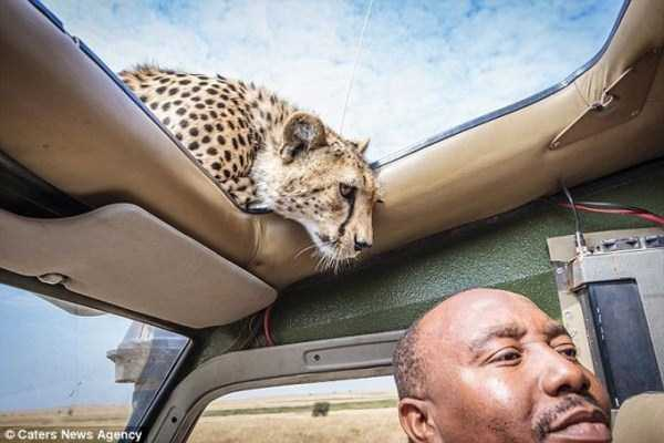 meanwhile-in-africa (12)