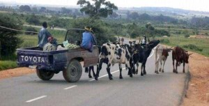 Meanwhile in Africa (34 photos) 2