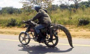 Meanwhile in Africa (34 photos) 25