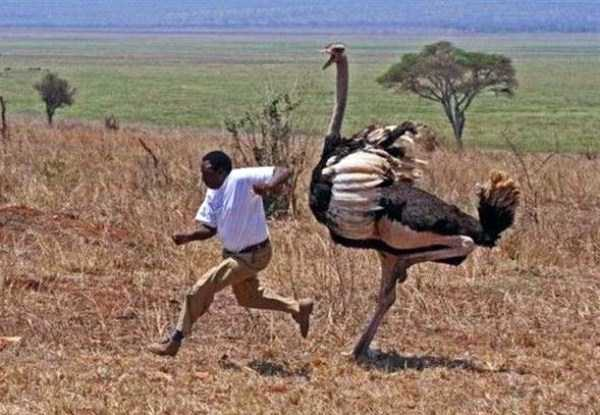 meanwhile-in-africa (5)