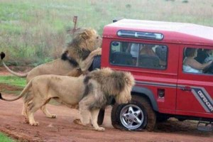 Meanwhile in Africa (34 photos) 9
