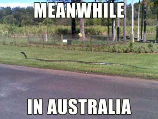 meanwhile-in-australia (36)