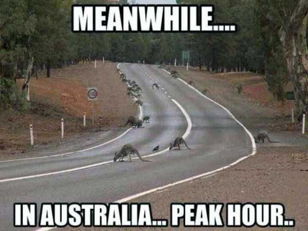 meanwhile-in-australia (43)