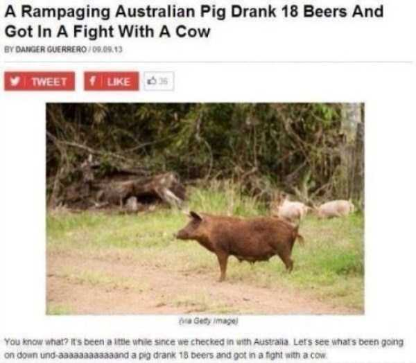 meanwhile-in-australia (46)