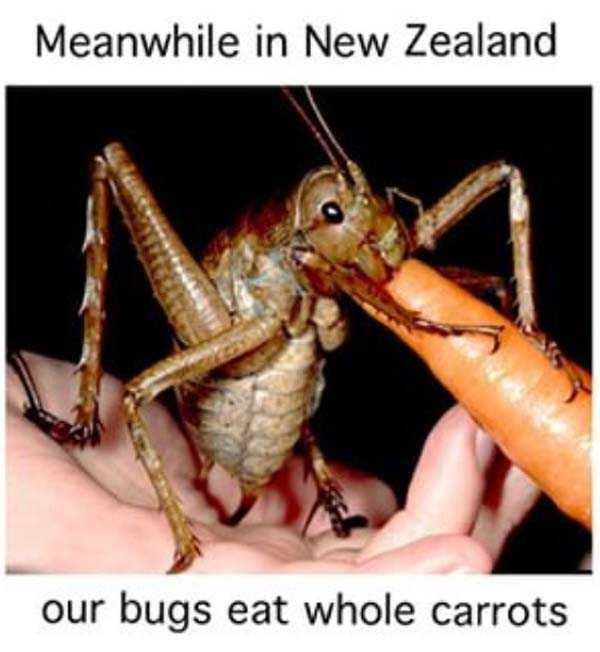 meanwhile-in-new-zealand (1)