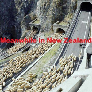 Meanwhile In New Zealand (27 photos) 27