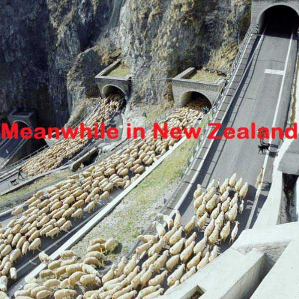 meanwhile-in-new-zealand (27)