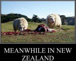 Meanwhile In New Zealand (27 photos) 24