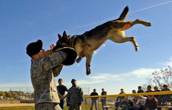 perfectly-timed-military-pictures (10)