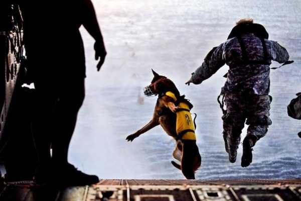 perfectly-timed-military-pictures (27)