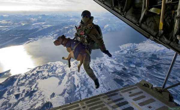 perfectly-timed-military-pictures (32)