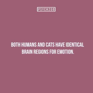 27 Useful Facts About the Human Psyche (27 photos) 19