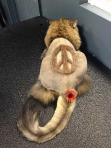 Ridiculously Stupid Cat Haircuts (25 photos) 12