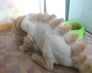 Ridiculously Stupid Cat Haircuts (25 photos) 17