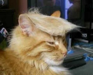 Ridiculously Stupid Cat Haircuts (25 photos) 22