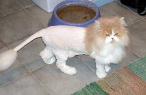 Ridiculously Stupid Cat Haircuts (25 photos) 23