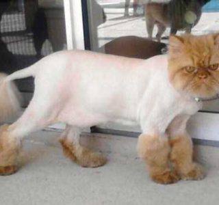 Ridiculously Stupid Cat Haircuts (25 photos)