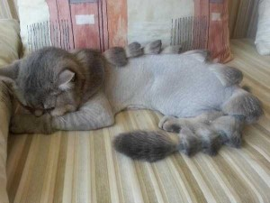 Ridiculously Stupid Cat Haircuts (25 photos) 4