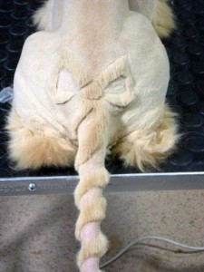 Ridiculously Stupid Cat Haircuts (25 photos) 5