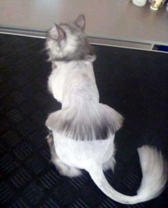 Ridiculously Stupid Cat Haircuts (25 photos) 6