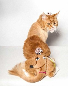 Ridiculously Stupid Cat Haircuts (25 photos) 8