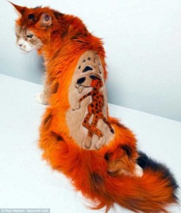 Ridiculously Stupid Cat Haircuts (25 photos) 9