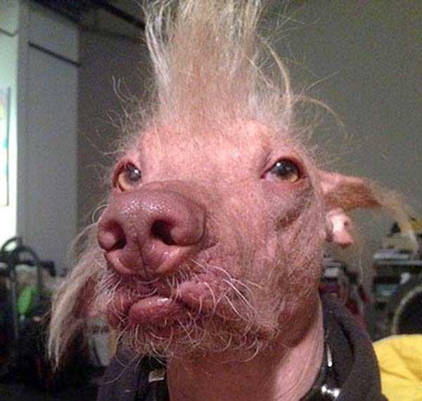 ugliest-dogs (12)
